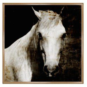 Aristotle II Horse Art