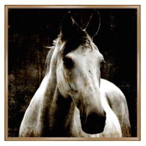 Aristotle Horse I Art