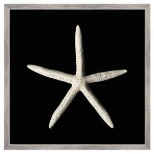 Black and White Starfish Art
