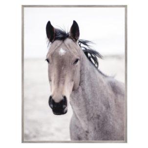 Buckskin Mare Horse Photography Art