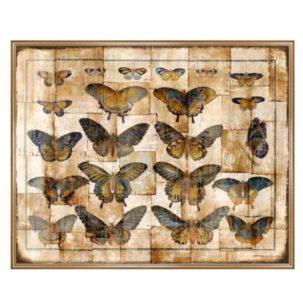 Collage de Papillons Butterfly Art
