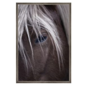 Horse Eye Photography Art