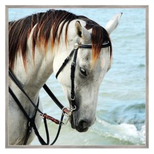 Horse in Sea Breeze Art