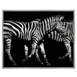 Black and White Zebras Art