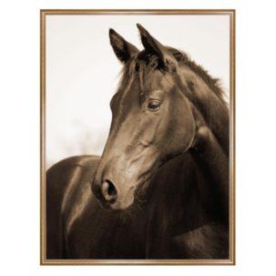 Sepia Horse Photography Art