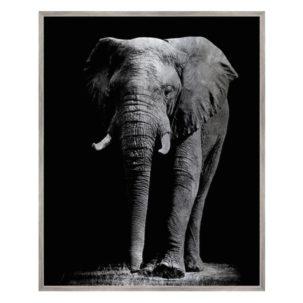 Silver Safari Elephant Photography Art.
