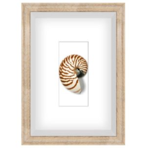 Spiral Shell 1 Shadow Box Art