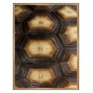 Tortoise Shell Photography Art 3