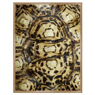 Tortoise Shell Photography Art 5