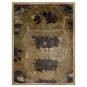 Tortoise Shell Photography Art 8