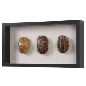 Tortoise Shells Shadow Box Art Side View