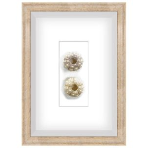 White Sea Urchin Shadow Box Art